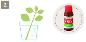 挿し芽の方法2