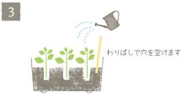 挿し芽の方法3