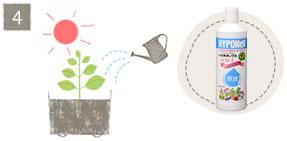 挿し芽の方法4